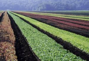 Диверсификация технологии в растениеводстве
