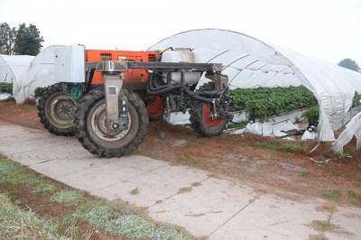 Фермер створив робота для обприскування полуниці