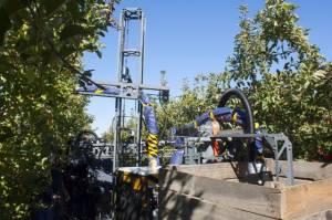 Ripe Robotics починає випробування робота-збирача фруктів Eve