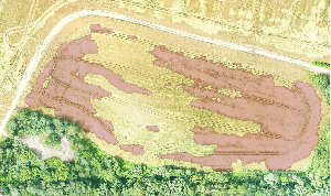 Crop Saver: штучний інтелект для моніторингу полів
