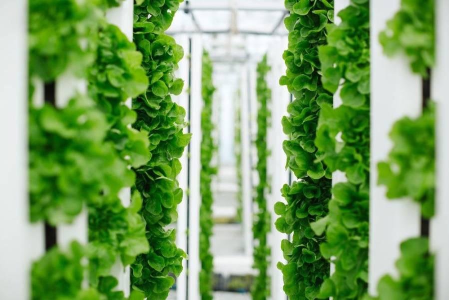 Unfold займётся выведением высокопродуктивных овощных культур для вертикальных ферм