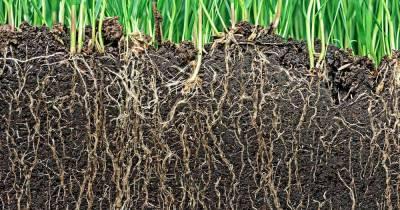 Инокуляция посевного материала: будущее за биопрепаратами?
