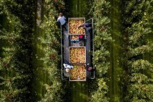 Дрони — ефективний інструмент для садівництва