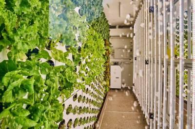 Как организовать вертикальную ферму?