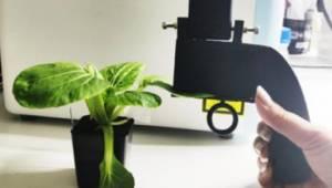 Метод рамановской спектроскопии поможет определить дефицит азота у растений