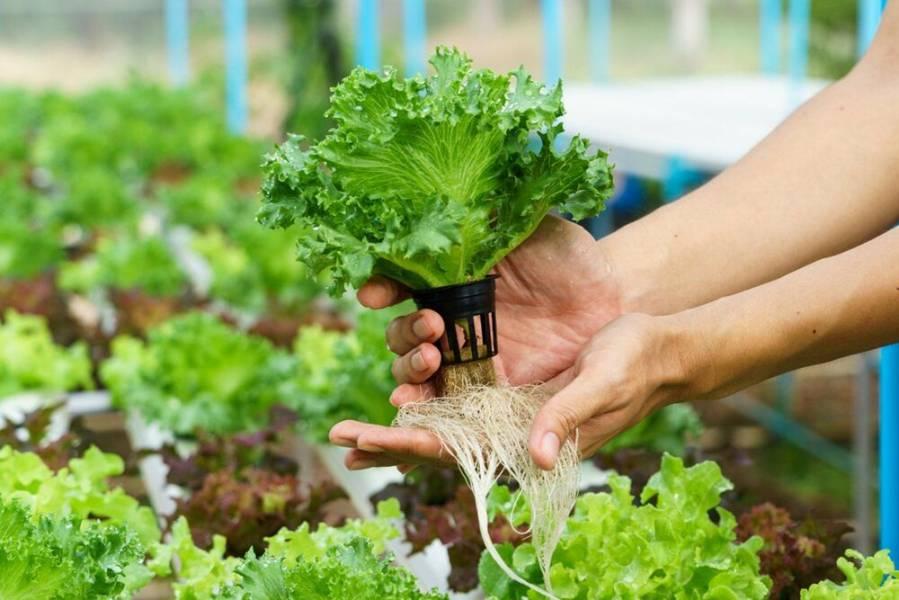 Аэропоническая теплица для выращивания зелени