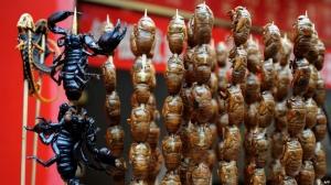 11 стартапов, предлагающих есть жуков