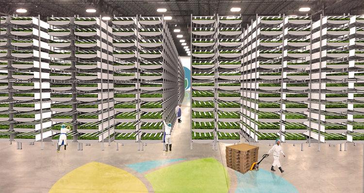 Что происходит внутри самой большой в мире вертикальной фермы?