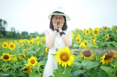 Ферма подсолнухов стала популярной в Instagram. Фермеры очень быстро пожалели об этом.