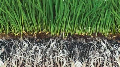 Биостимуляторы: перспективная технология для сельского хозяйства