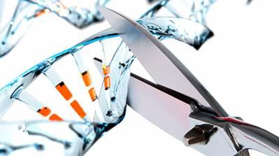Технология генного редактирования CRISPR