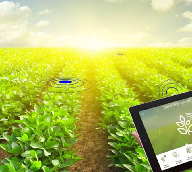 Преимущества применения IoT-решений в растениеводстве