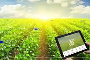 IoT в сельском хозяйстве: 5 вариантов использования технологии
