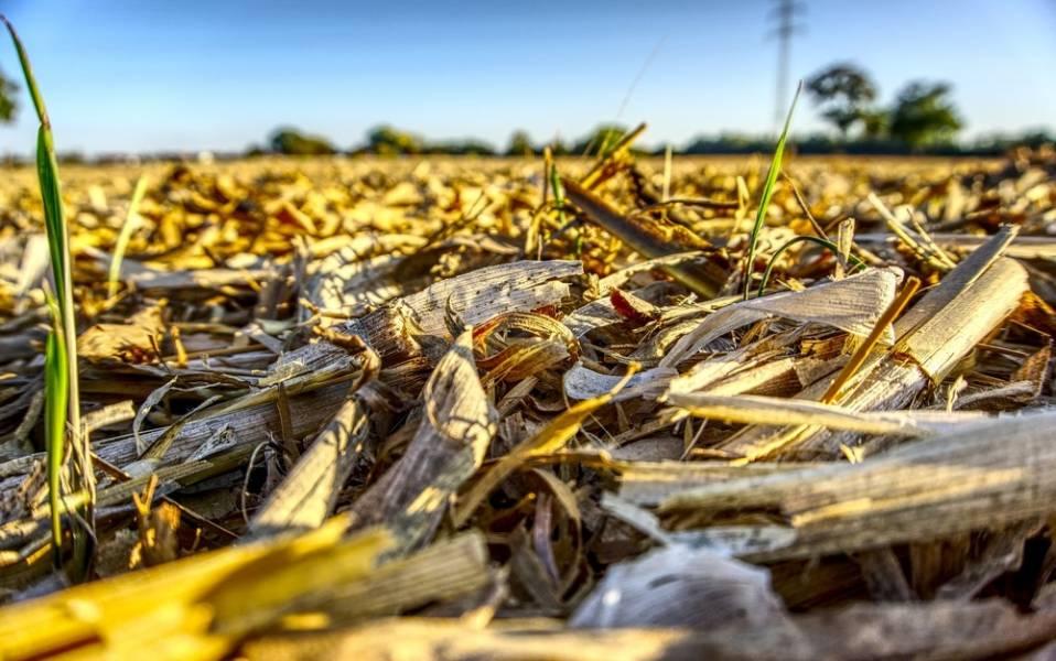 Измельчение растительных остатков в поле