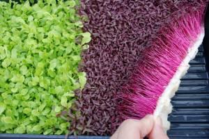 Что выгодно выращивать в теплице зимой?