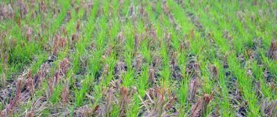 Як збільшити врожайність за допомогою технології No-till
