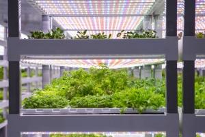 В Лас-Вегасе открыли гигантскую вертикальную ферму стоимостью $30 млн