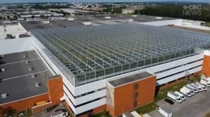 Самая большая в мире городская ферма площадью 15 тыс кв. м. открылась в Монреале