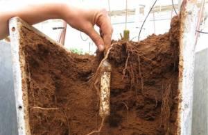 Нова технологія вимірювання нітратів у ґрунті