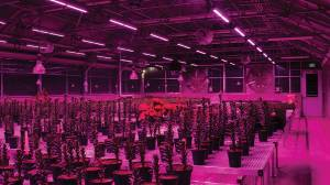 Какие лампы лучше использовать для выращивания растений?