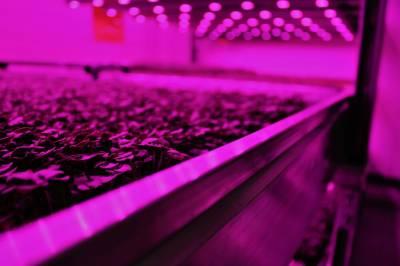 $5 млн для створення вертикальної ферми у найдорожчому районі Лондона