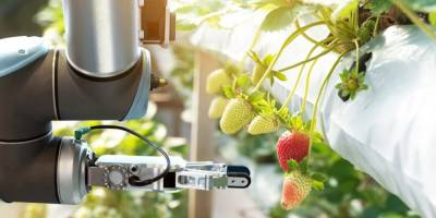 Роботи на сільськогосподарському ринку 2019