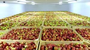 Технологии направленные на увеличение срока хранения овощей и фруктов