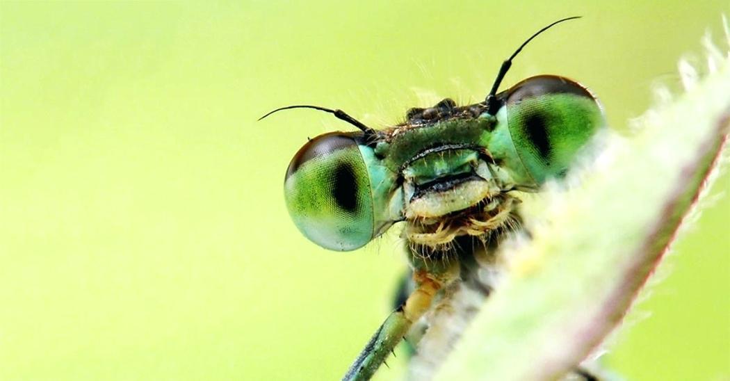 Генетическая модификации растений с помощью переносящих вирусы насекомых — средство защиты или биологическое оружие?