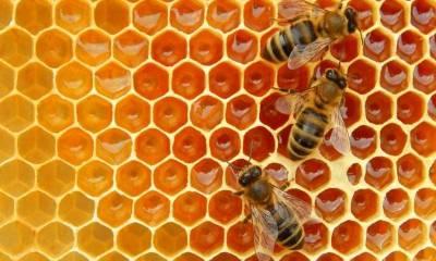 Як створити пасіку та заробляти на бджільництві в Україні — гід для бджолярів