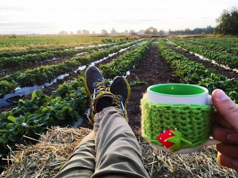 Автоматизация процессов на ягодной ферме