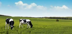 Влияние высокоэффективного фермерства на экологию