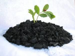 Производство Biochar методом пиролиза решит проблему отходов животноводства