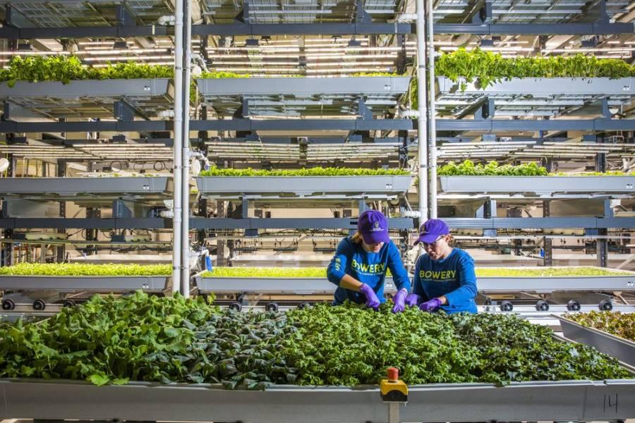 Как инновации создают принципиально новую сельскохозяйственную бизнес-модель