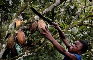 Что хуже для сельского хозяйства Нигерии — засуха или сезон дождей?