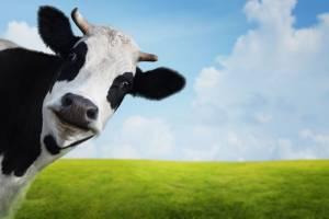 Відмова від вживання м'яса — не найкраще рішення проблеми парникових газів