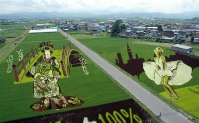 В Японии создают рисунки из стеблей риса на полях