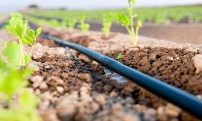 Технология, которая спасла мир от голода: капельное орошение