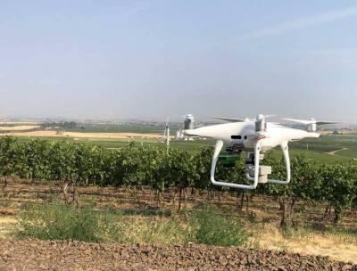 Pollen Systems — стартап, що використовує дрони та штучний інтелект для збору й аналізу інформації