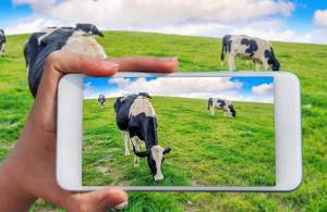 Программы для управления фермами: самые нужные функции