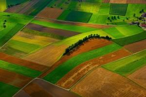 Як агровиробнику ефективно управляти земельним банком?