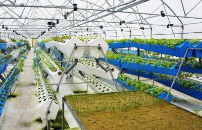 Як створити вертикальну ферму в Україні?