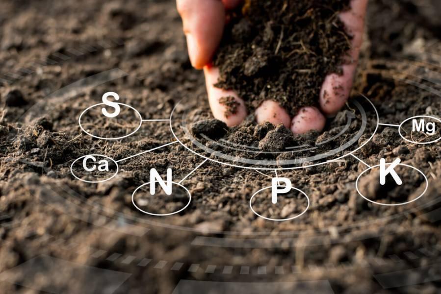 Як правильно проводити агрохімічний аналіз ґрунту?