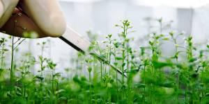 Генно-інженерні рослини зможуть рости на раніше непридатних для сільського господарства ґрунтах