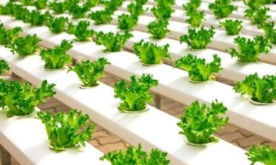 Исследователи приблизились к созданию умных растений