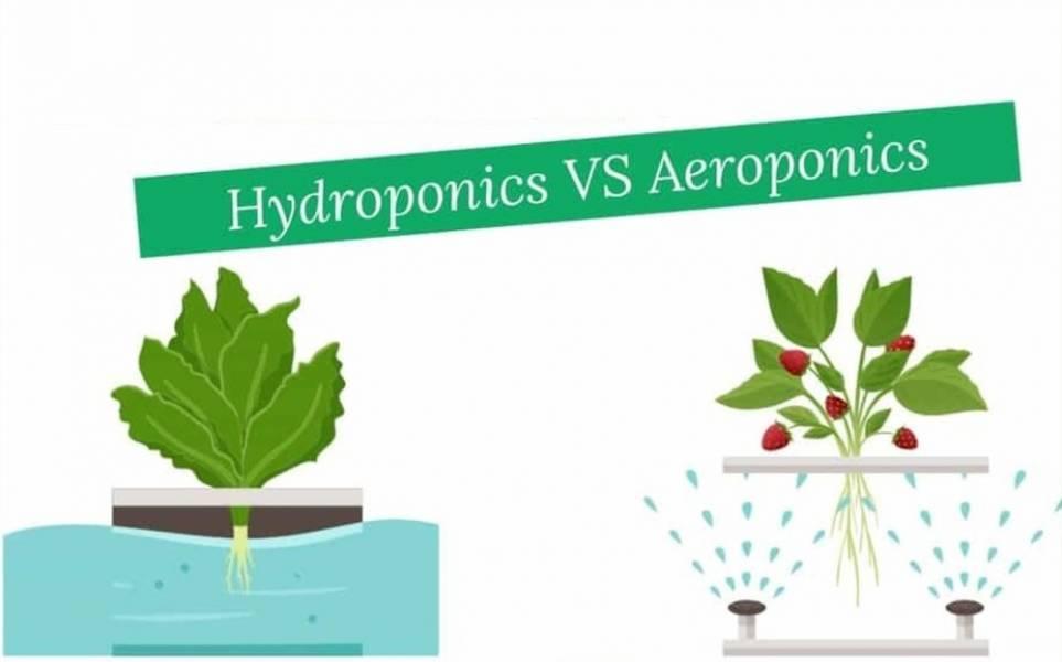 Гидропоника или аэропоника — во что лучше инвестировать?