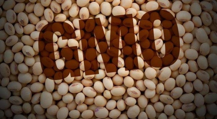 На украинских полях 48% генетически модифицированной сои — исследование Agent Green