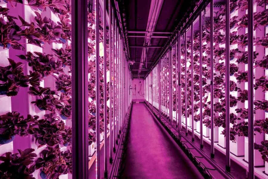 Протеиновые батончики из насекомых и вертикальные фермы в бомбоубежищах. Европейские стартапы из FoodTech 500