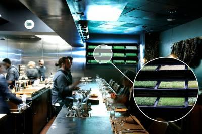 ІnHouse Produce створює гідропонічні стіни для ресторанів