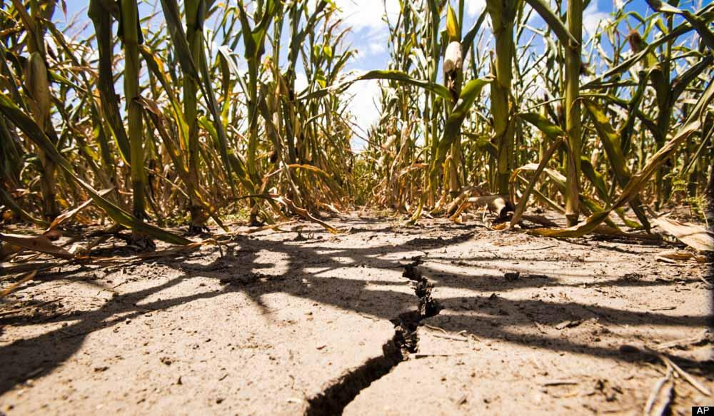 Агрострахование в Украине: проблемы и решения