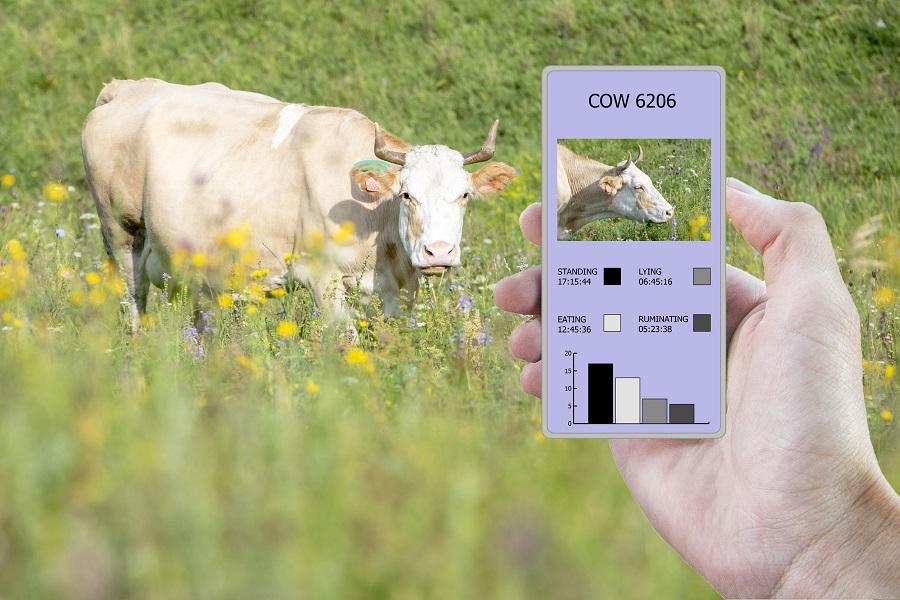 Как мобильный интернет меняет сельское хозяйство в ЮАР